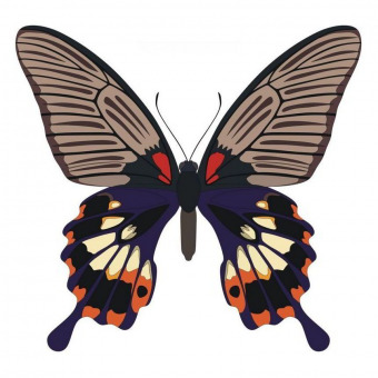 Papilio Memnon butterfly vector