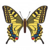 Papilio Machaon butterfly vector